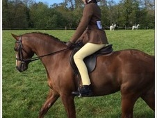 Perfect allround pony