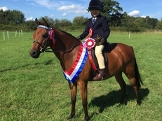 Stunning 12.2 Show/Competition/Dressage/PC Event Pony