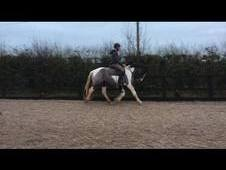 Quality Irish mare