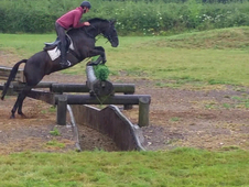 16hh flashy eventer or dressage