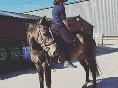 16.1 TB Gelding - Family horse / Mother/Daughter share