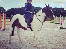 16.2hh Irish Hunt Mare