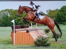 Super event / Dressage horse