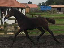 Cracking filly for sale