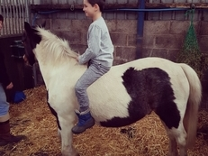 12.2hh 3yrs old coloured pony gelding