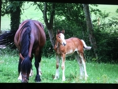 Beautiful mare and foal for sale.