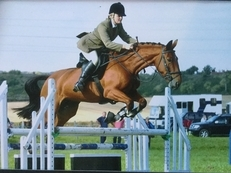 Quality eventer / hunter