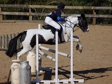 Price reduced Top Class Childs Competition Pony