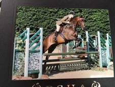 TOP CLASS ESTABLISHED SMALL RIDING HORSE / INTERMEDIATE/WORKER SO...