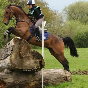 15hh Sports Horse Mare For Loan