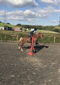 14.2hh Section D mare for part loan