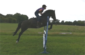 14hh New Forest x Arab for Loan