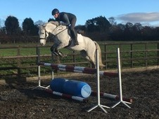Super smart Connemara pony