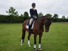Competitive Dressage home wanted