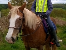 Rider/ Sharer Wanted for Safe Cob
