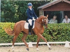 Huge potential KWPN 6 yr old gelding