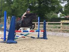 FOR SALE TOP CLASS NEW FOREST PONY