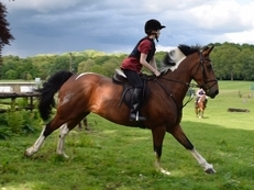 16hh1 Hunter tremendous potential