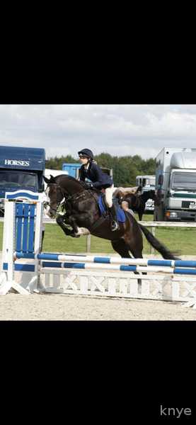 Stunning 15.2hh genuine all rounder