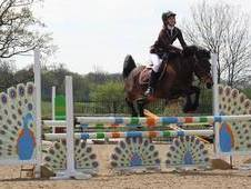 13. 1 bombproof childs pony