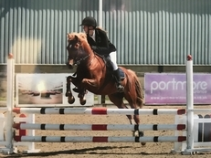 Thistledown angus (Gus) great showjumping pony