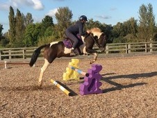 Absolute all round family pony/top competition pony