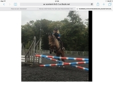 All rounder pony Okeydokey