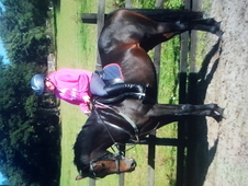 Stunning mare 9yr old British Sports Horse (bay)