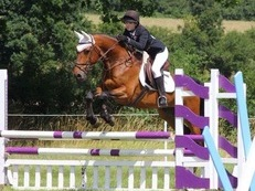 Flashy 16hh 11 year old gelding