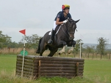 Handsome Gelding - Jumping Machine
