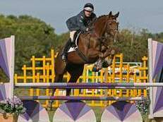 Super competition horse for sale