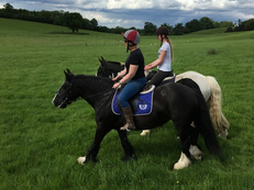 April 14.2hh Black Mare STUNNING 5yr old cob