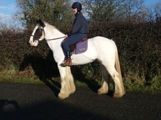 Bombproof all rounder cob