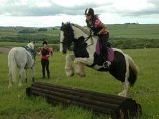 15hh 10 year old piebald cob gelding price REDUCED to £1500 for the right home