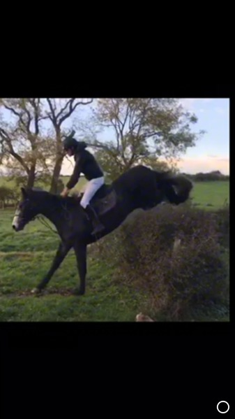 Easy and talented mare
