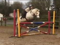 GREACH CAISIL MISTY DAWN 14hh reg. Connemara mare rising 5yro