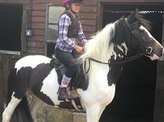 13.2hh skewbald mare 7 yrs section c X gypsy cob