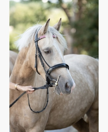 SAFE 14.2 PALOMINO 4yrs old