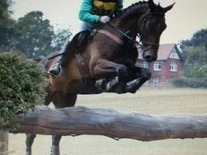 Hunting Masters Horse