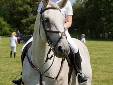 Gorgeous Mare for Sale