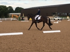 Eye-catching dressage prospect by Ramiro