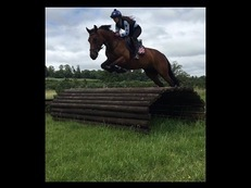 Jumping machine/all rounder superstar for sale!