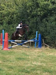 15.3HH 12 year old honest gent