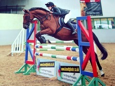 ***Fun, talented competition horse FOR SALE fit and ready to go.