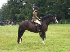 Pretty Welsh Section D Mare Super Allrounder