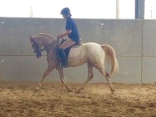 Ideal allround /bsja pony