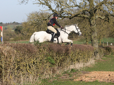 18 yr old, 15.2 hh, Connemara x TB Mare For Loan