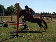 11. 2hh Super Jumping Pony