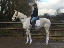 Cruise stunning allrounder ideal for a novice