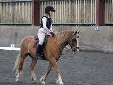 Super fun jumping and games pony, fantastic 2nd pony, handsome chestnut gelding 12.2hh